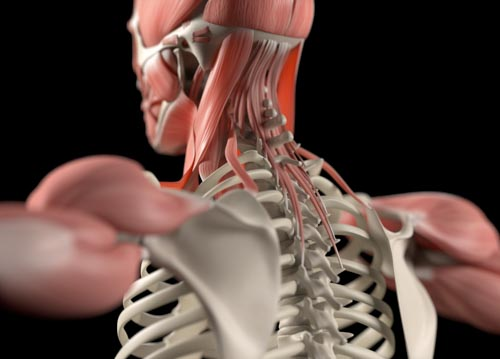 Neck Pain Conditions   Integrated Pain Consultants Scottsdale