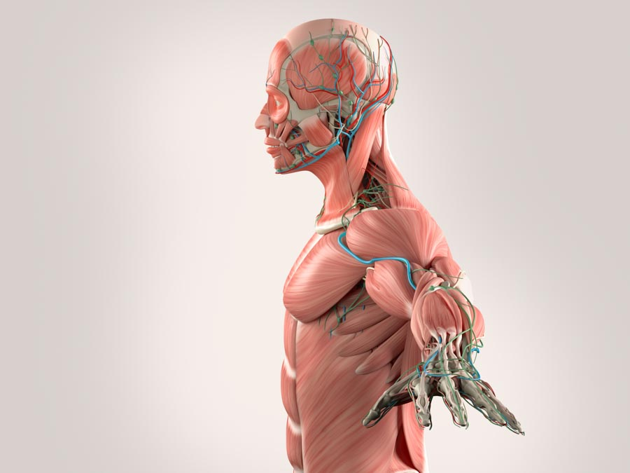 Radiofrequency Ablation Helps Chronic Pain | Integrated Pain Consultants
